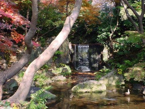 Japan karatasi la kupamba ukuta with a mahogany, a live oak, and a beech called Koishikawa Koraku En