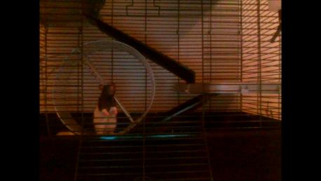 My Pet Rats Ben and Jerry