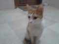 My cat - cats photo