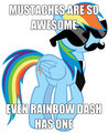 Ranbow Dash  - my-little-pony-friendship-is-magic photo