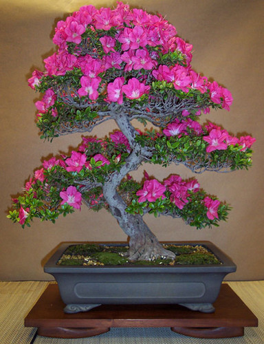 Japan karatasi la kupamba ukuta containing a bonsai and a bouquet entitled bila mpangilio Japanese Stuff
