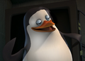 Randomly Generated Pom OC - penguins-of-madagascar photo
