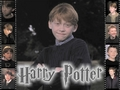 Ron♥ - harry-potter wallpaper