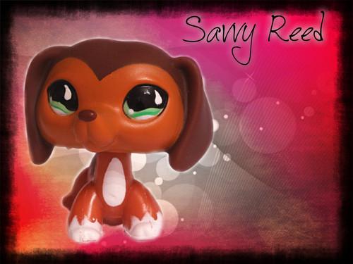"Savvy Reed ""PiZap.com"""
