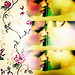 The twilight series ♥ - twilight-series icon