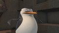 Uuuuuuh...Skipper? O.O - penguins-of-madagascar photo