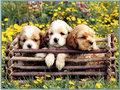 amor cachorrinhos