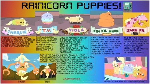 rainicorn puppies