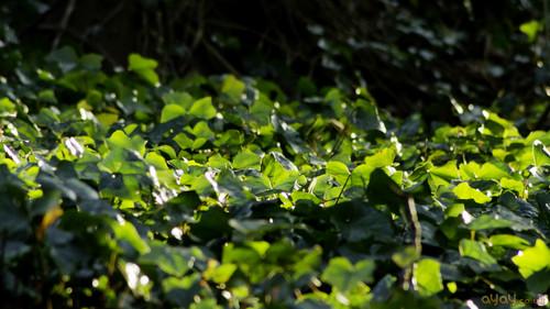 sunlight on green foliage