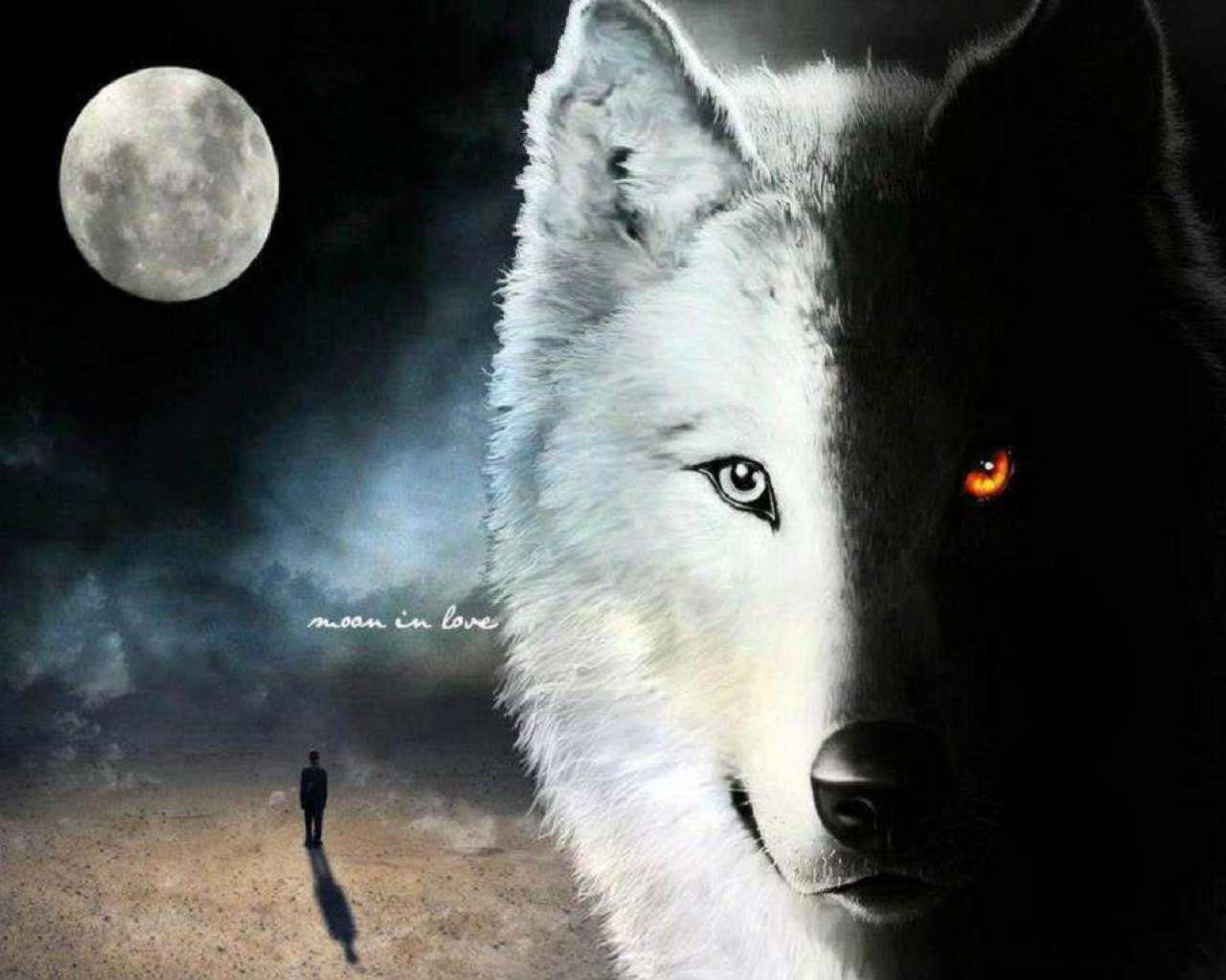 Cool white wolf wallpapers - photo#23