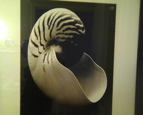 zebra shell