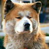 ★ Hachi: A Dog's Tale ☆