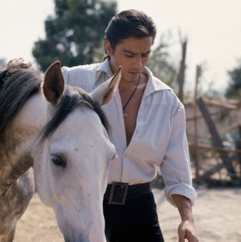 Alain Delon wallpaper containing a lippizan, a horse trail, and a horse wrangler titled Alain