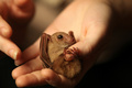 Baby Bat  - animals photo
