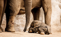 Baby Elephant  - animals photo
