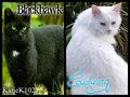 Blackhawk & Cloudwing