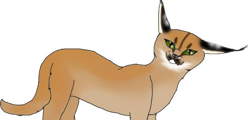 Caracal wallpaper possibly containing a lippizan entitled Caracal