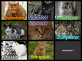 DovexTiger123 cats - waterclan-the-rulers-of-the-ocean photo