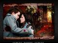 edward-and-bella - Edward+Bella wallpaper