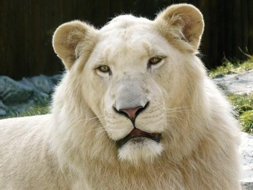 Endangered Wild जानवर