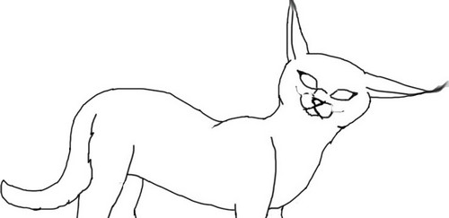 Caracal wallpaper with a japanese plum, an amêndoa tree, and a beech called Free Caracal Lineart