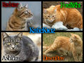 KatieK102 Cats - waterclan-the-rulers-of-the-ocean photo