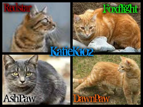 KatieK102 Katzen