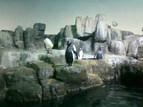 The Penguins in real life
