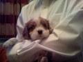 baby charlie