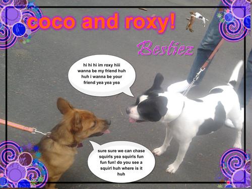 coco and roxy are bestiez