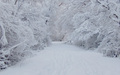 snowy snow - winter photo