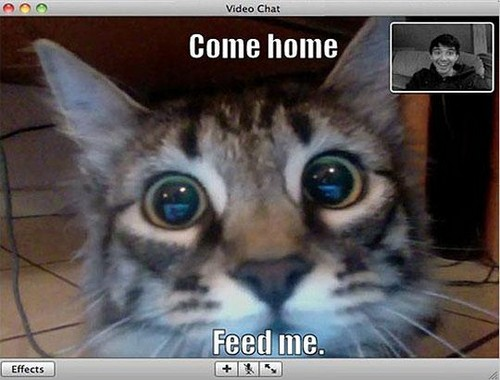 webcam cat