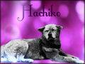 ★ Hachikō 忠犬ハチ公 ☆