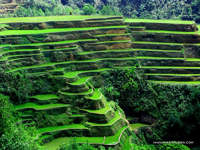 Filipinos unite images banaue rice terraces wallpaper for In the terrace
