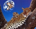 Big Cats - wild-animals wallpaper