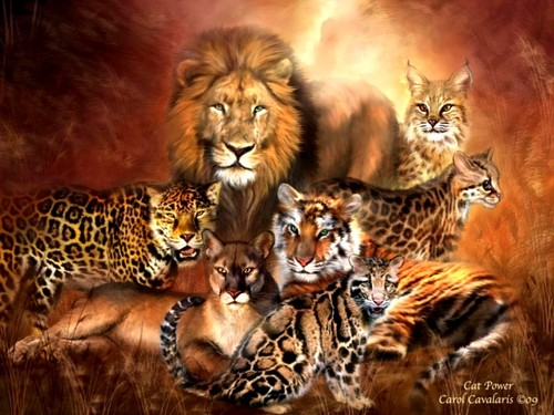 Hd Images Of The Wild Animals Wallpapers And Backgrounds: Wild Animals Images Big Cats HD Wallpaper And Background