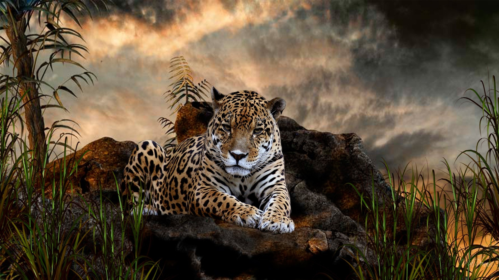 big 3d animal wallpaper - photo #22