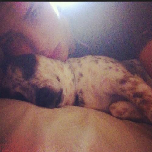 Chicharito :D My dog :P