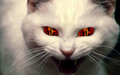 Demon cat - cats wallpaper
