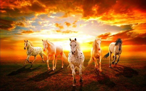 Animals wallpaper entitled Horses