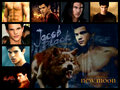 Jacob/Taylor Launtner - taylor-lautner fan art
