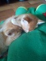 MY 2 CATS! GINGER AND TANGY... - cats photo