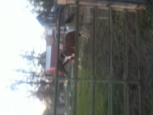 My horse JJ