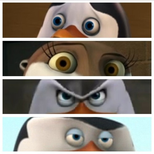Penguins face expression