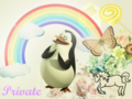 Private - private-the-penguin wallpaper