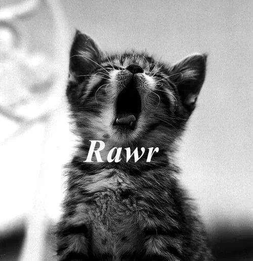 Rawr - Cats Fan Art (34313202) - Fanpop
