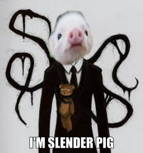 Slender Pig