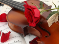 Violin & 玫瑰
