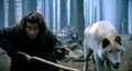 summer and osha - game-of-thrones-direwolves photo