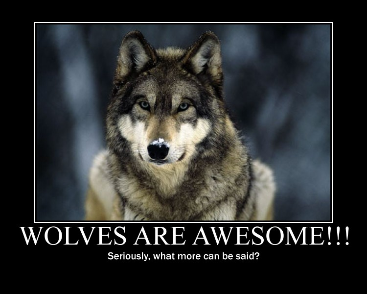 Wolf Backgrounds Quotes. QuotesGram